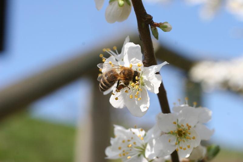Honig.....Honig....ich brauche Honig....
