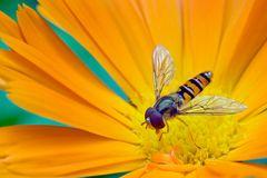 Honigschmaus