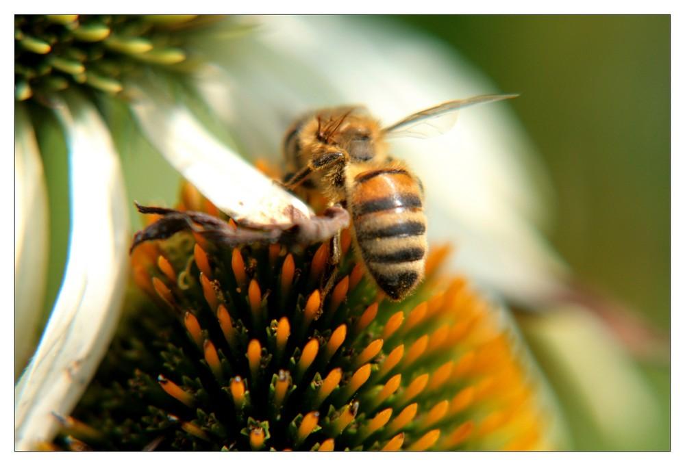 Honigsuche