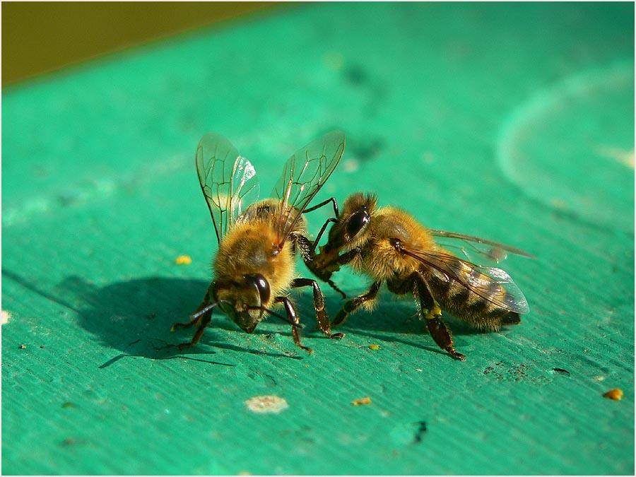 Honigzeit...