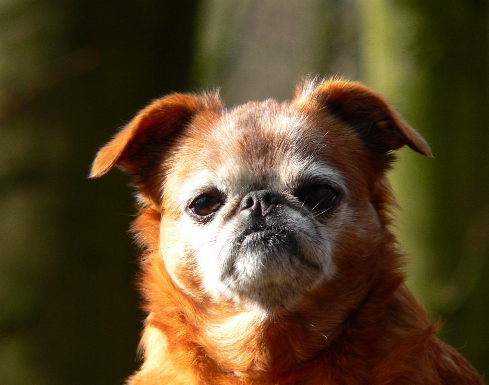 Hoody, fast elf Jahre alt