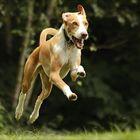 - Hop, Hop! -