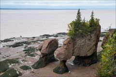 [ Hopewell Rocks ]