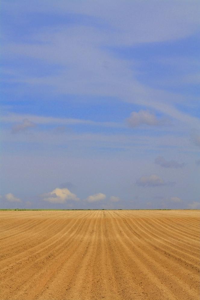 Horizon agricole