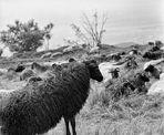 Hornisgrinde Pastorale
