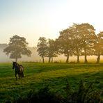 > Horse <