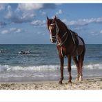 Horse And Sea