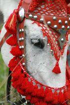 Horse called 'Tulip', yep! that's true.