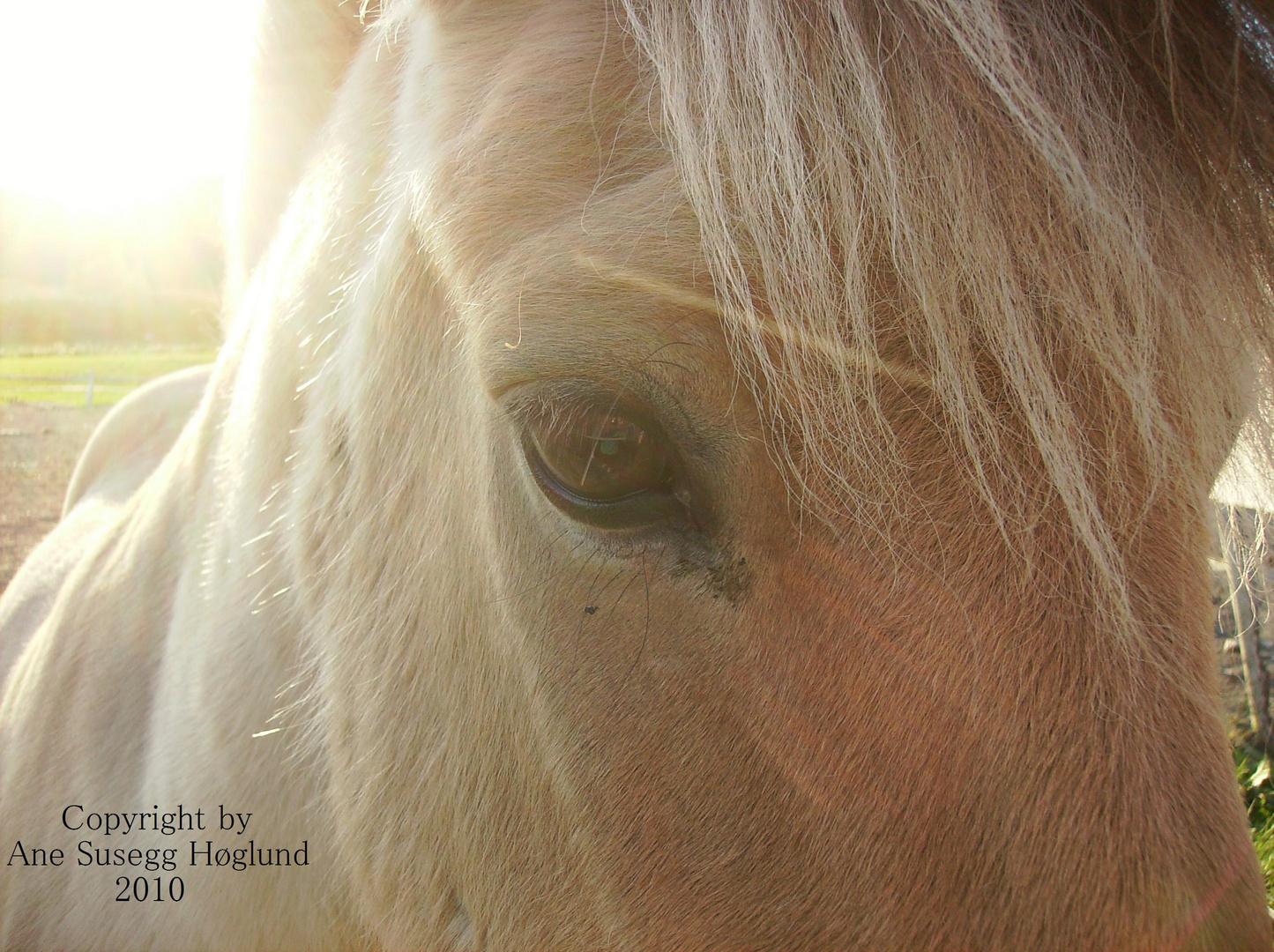 Horse Eye