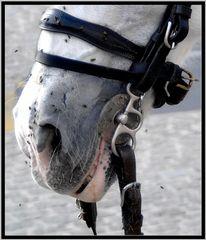 horse in cordoba