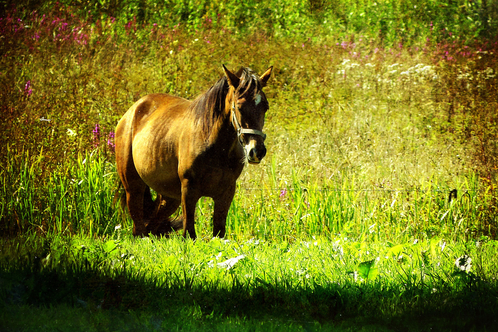 ... horse in the bosom of nature