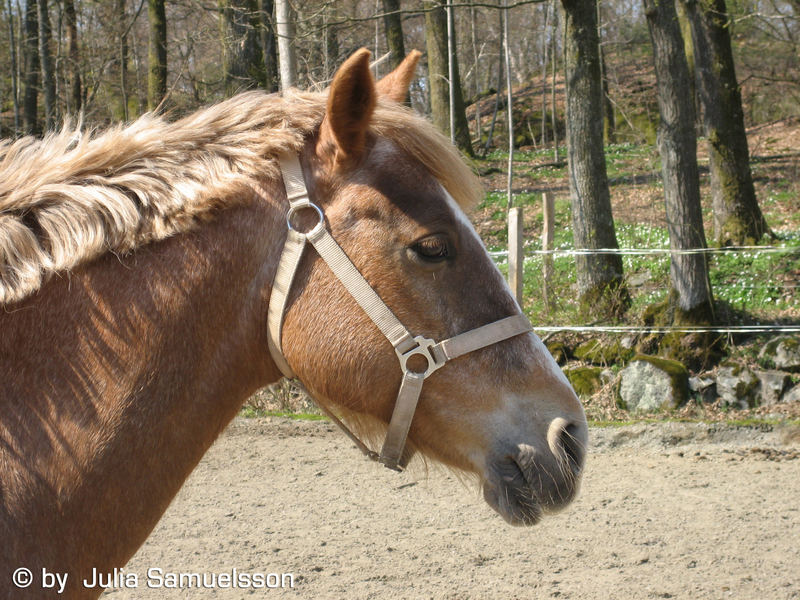 Horse in the spring