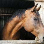 ...Horse .....La tenerezza di un'anima selvaggia........ (la mia )