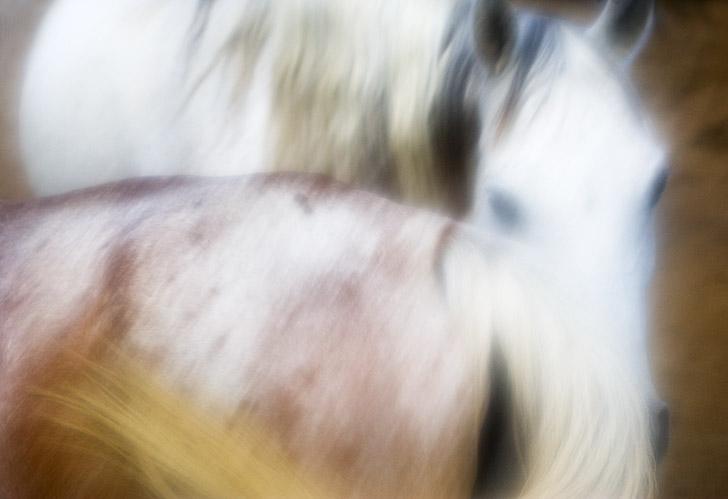 Horse No. 8