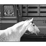 Horse trade 8