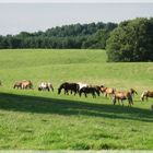Horseland....?