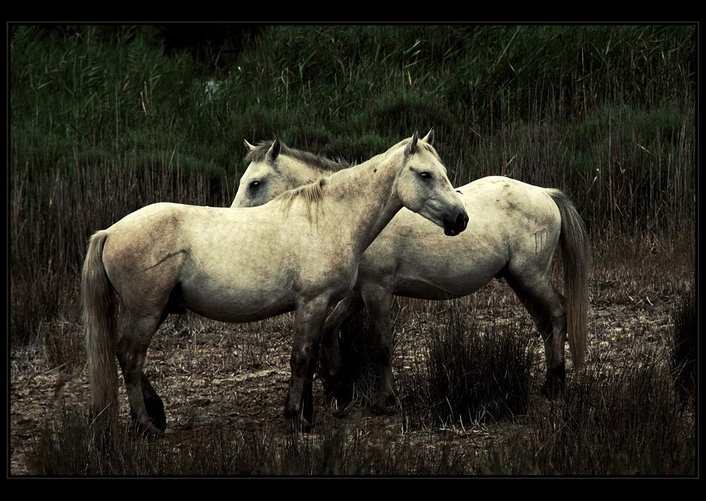 || HorseS ||