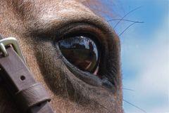 Horses Eye View