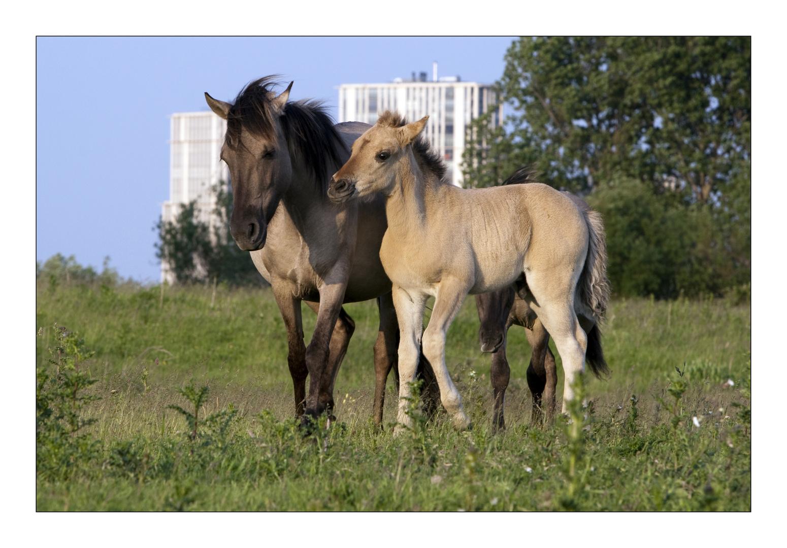 Horses (Landtong Rozenburg)