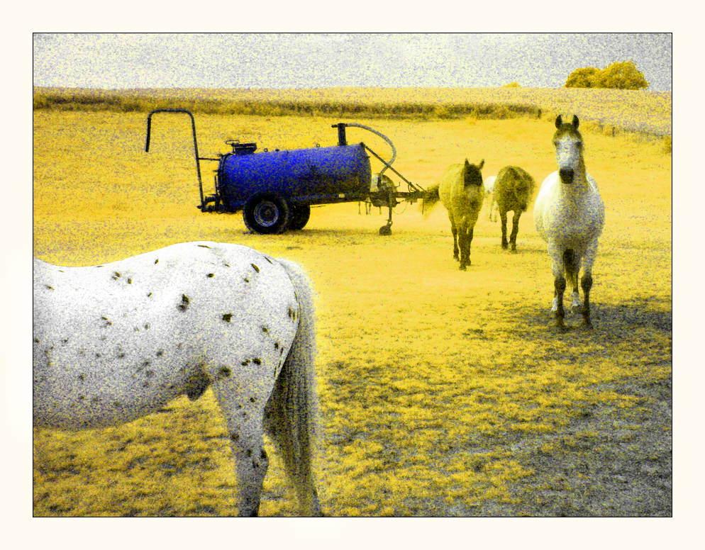 horses, surreal