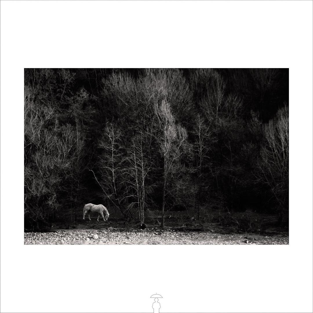 horses_8687