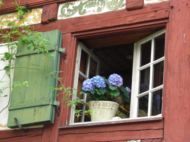Hortensie blau - romantisch