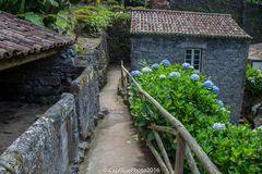 Hortensien im Tal der Mühlen - Ribeira dos Caldeiroes
