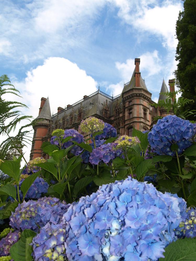 Hortensien-Schlossgarten