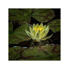 Hortus Botanicus 01