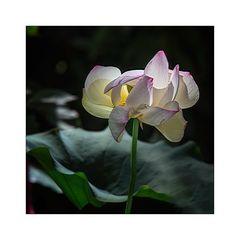 Hortus Botanicus 02