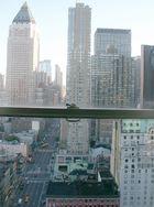 Hotelfenster in NY