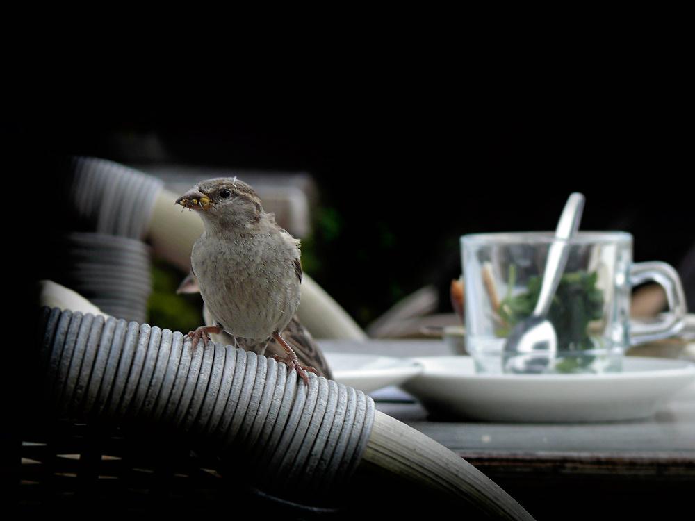 Hotspot for sparrows