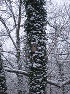 House in the tree / Das Haus im Baum