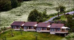 Houses in Norway Fjord