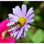 hover fly ?!
