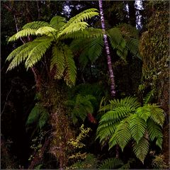 how it looks like in new zealands subtropical rainforest #2
