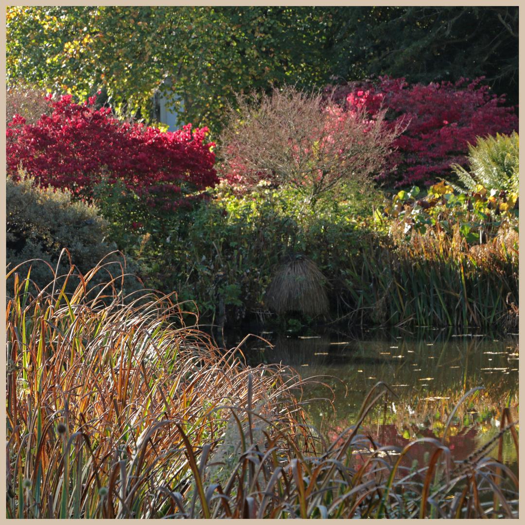 Howick garden 13