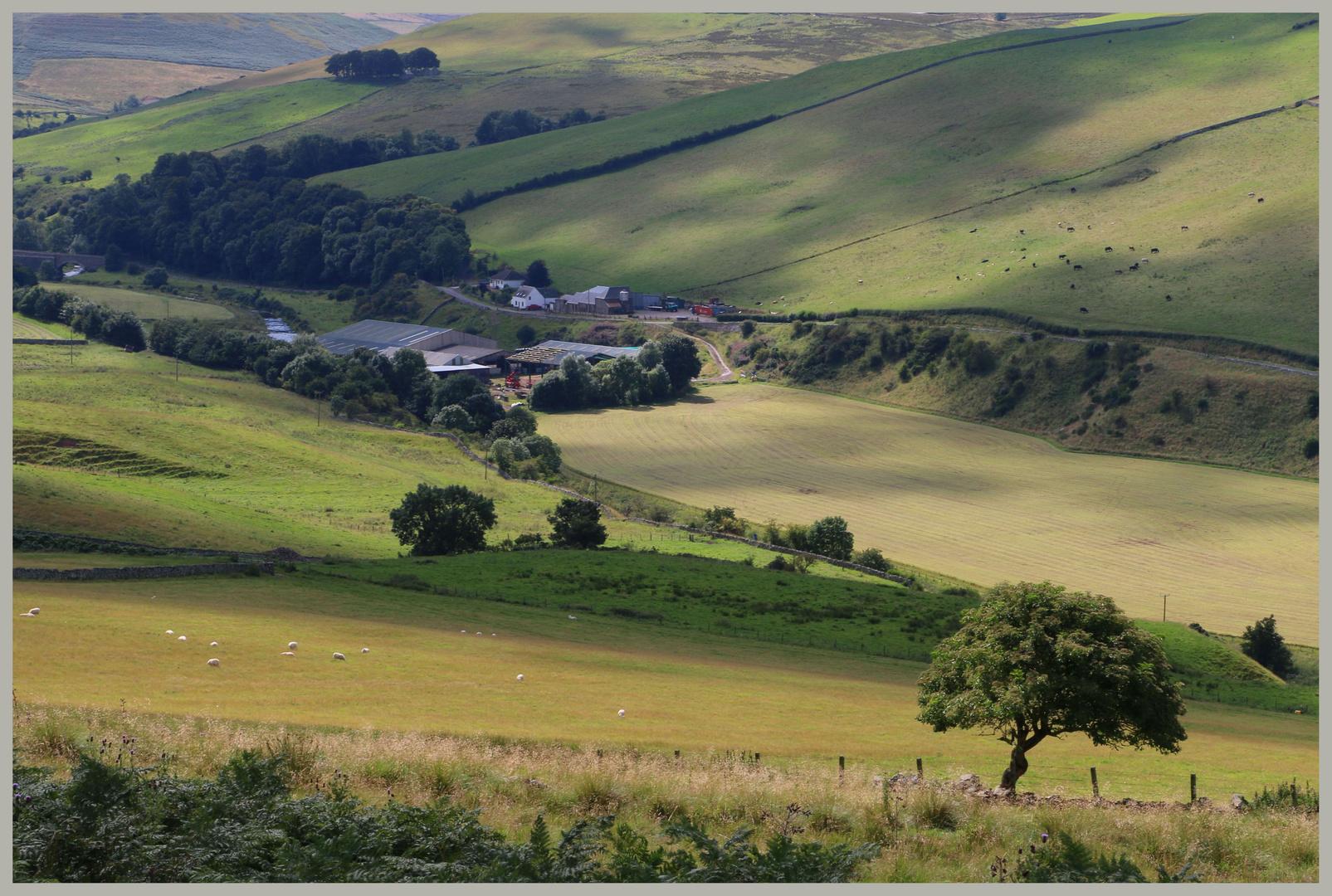 hownam grange farm Cheviot Hills Scotland
