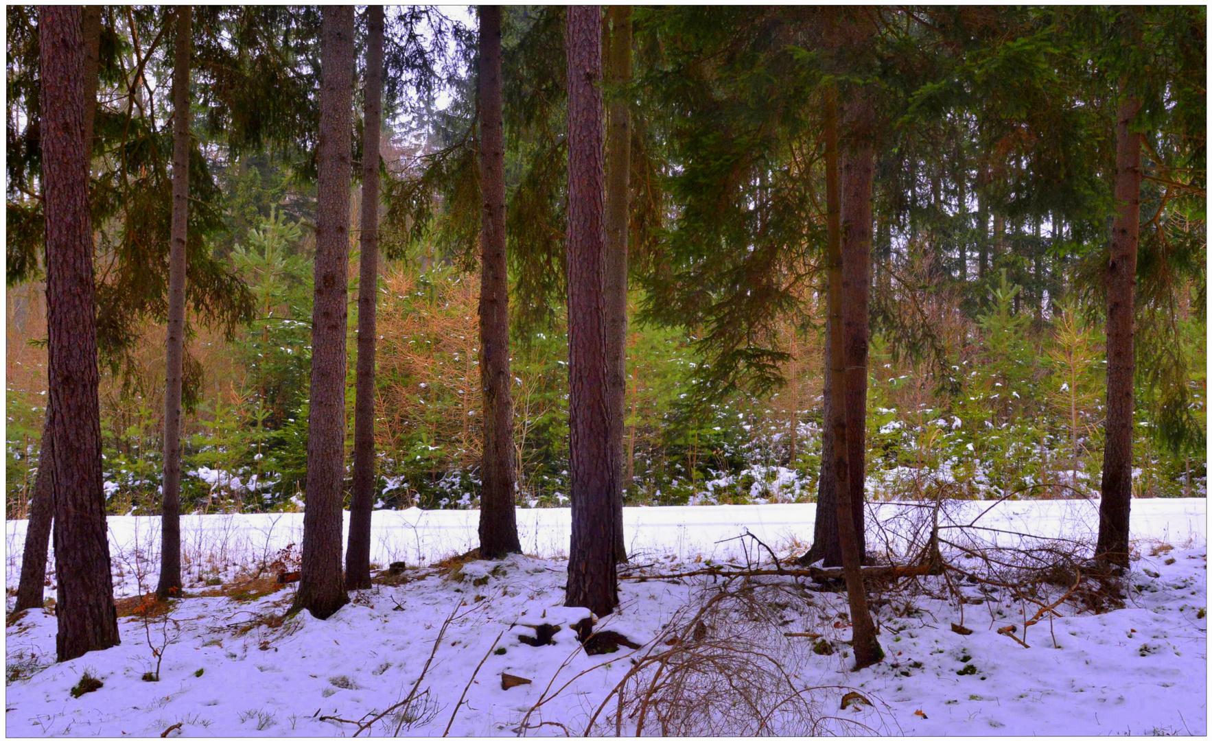 hoy en el bosque (Heute im Wald)