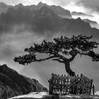 *Hua Berge @ Der heilige Baum*