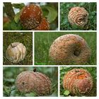 Hübsche Pilze!