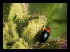 hübscher Käfer
