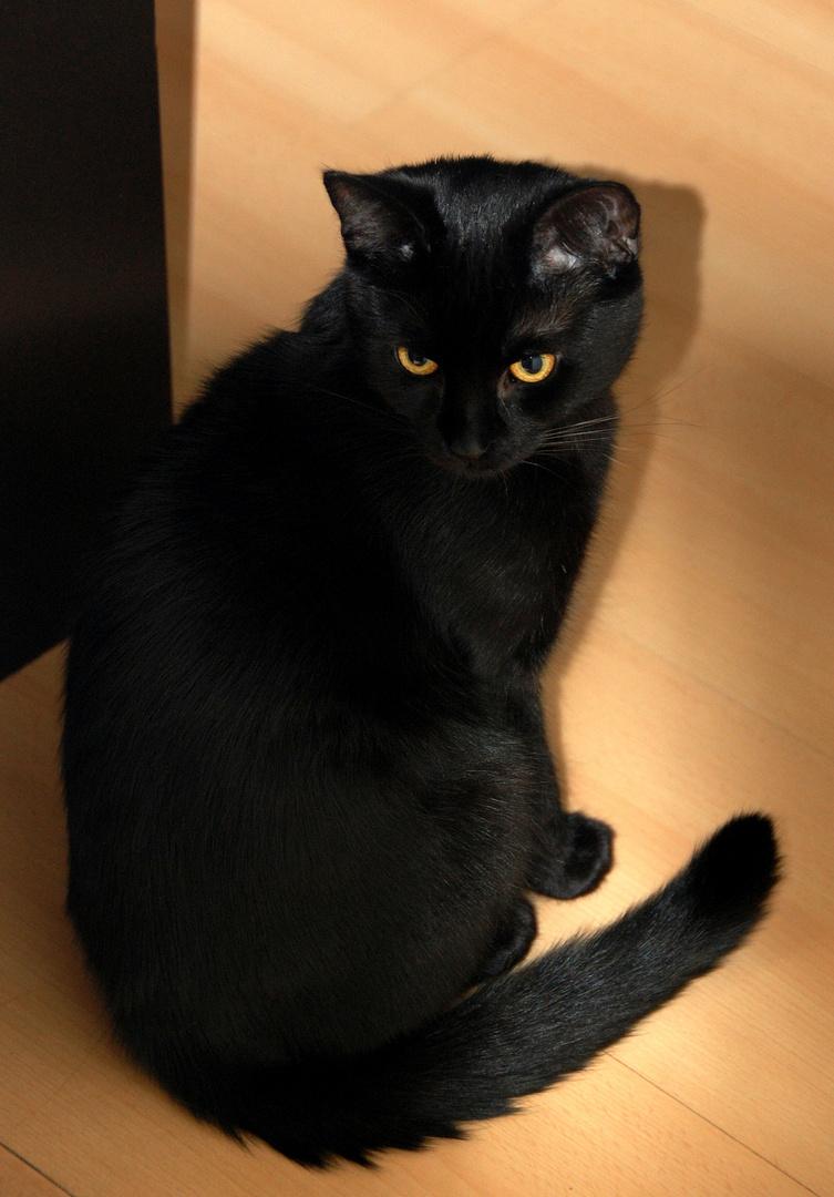 Hübscher schwarzer Mini-Panther ...