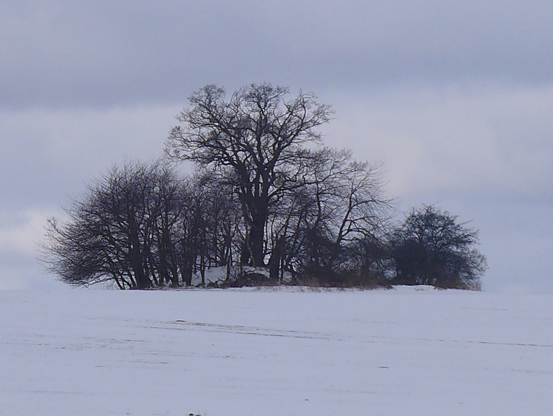 Hügelgrab zwischen Putbus und Lonvitz