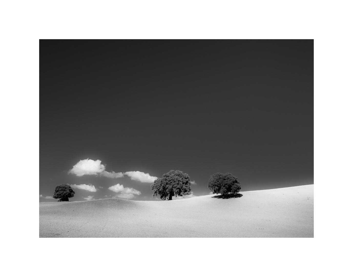 Hügelland - schwarz / weiß
