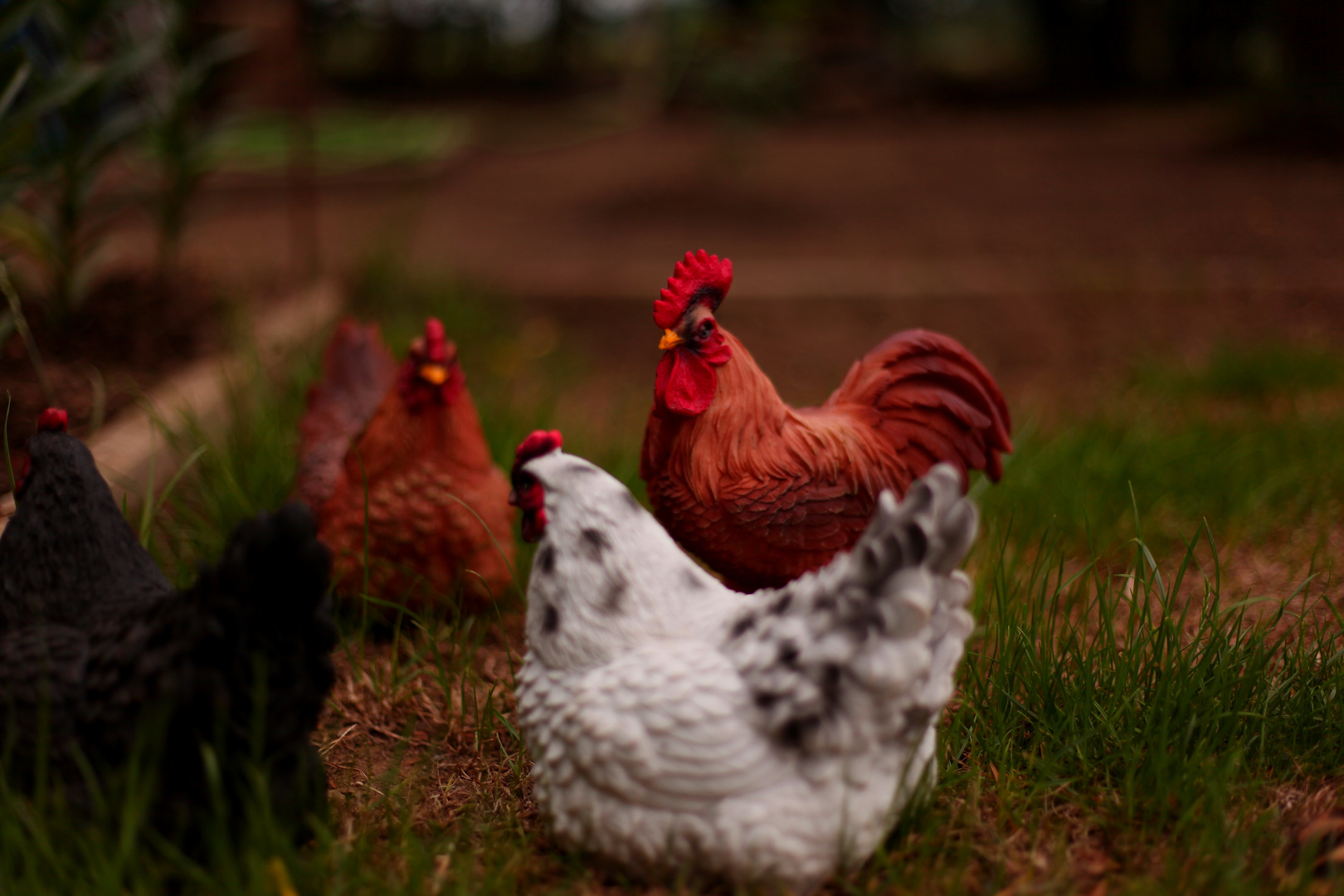Hühner auf dem Land