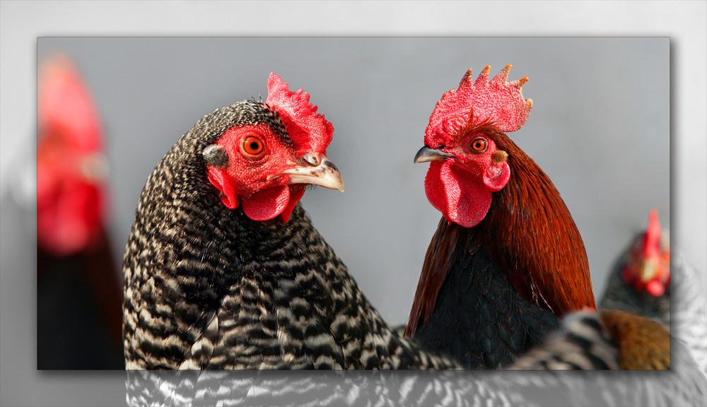 Hühneraugen
