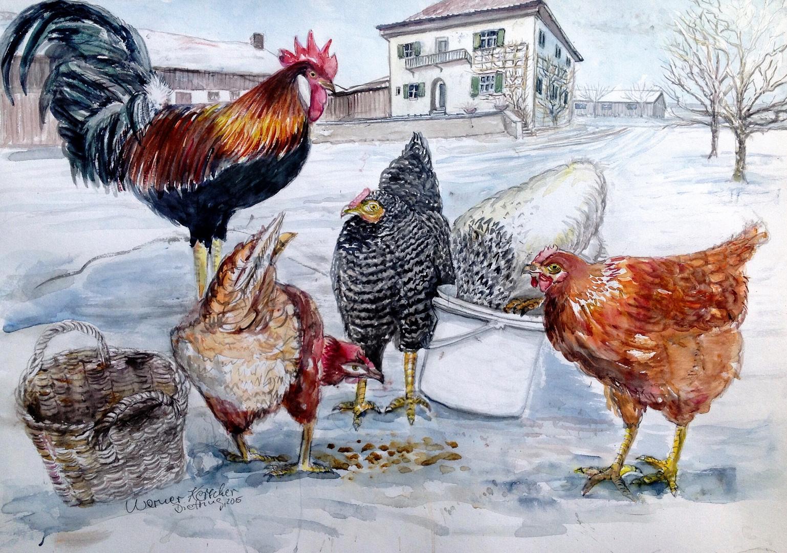 Hühnerfütterung in Dietring