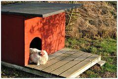 Hühnerhütte