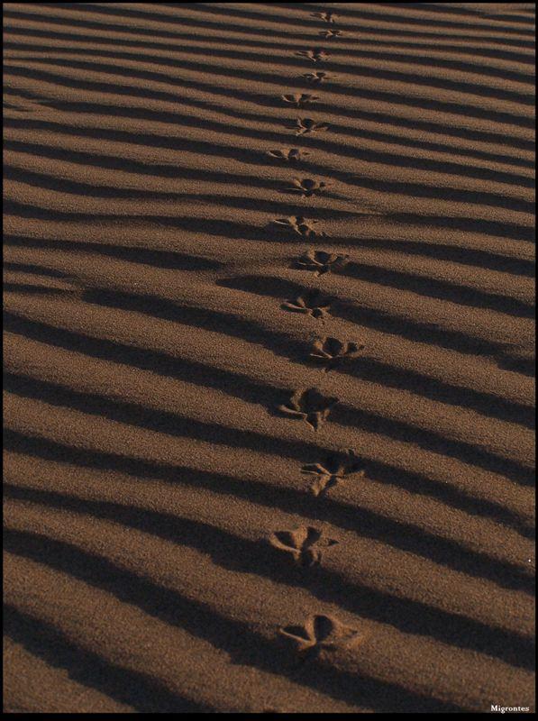 Huellas en la arena